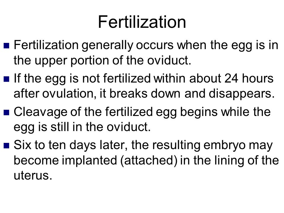 Fertilization Fertilization generally occurs when the egg is in the upper portion of the oviduct. If the egg is not fertilized within about 24 hours a