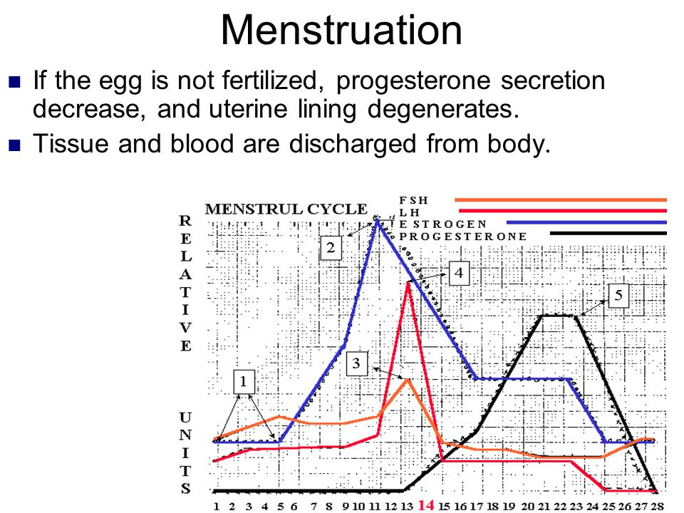 Menstruation If the egg is not fertilized, progesterone secretion decrease, and uterine lining degenerates. Tissue and blood are discharged from body.