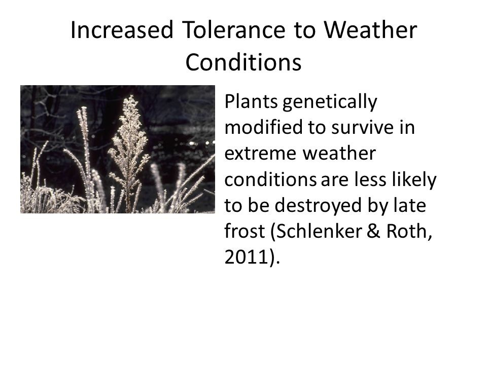 Increased Tolerance to Weather Conditions Plants genetically modified to survive in extreme weather conditions are less likely to be destroyed by late frost (Schlenker & Roth, 2011).