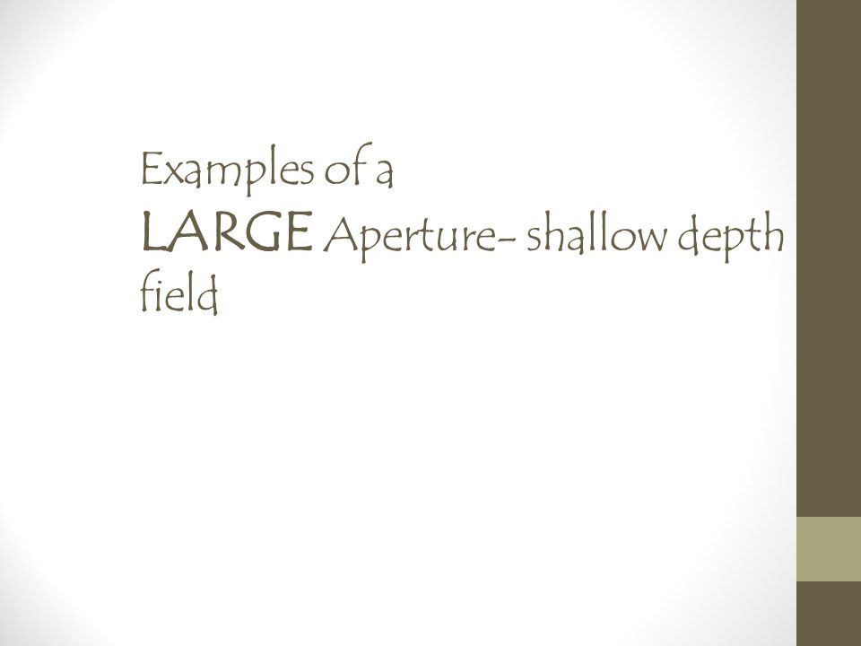 Examples of a LARGE Aperture- shallow depth of field