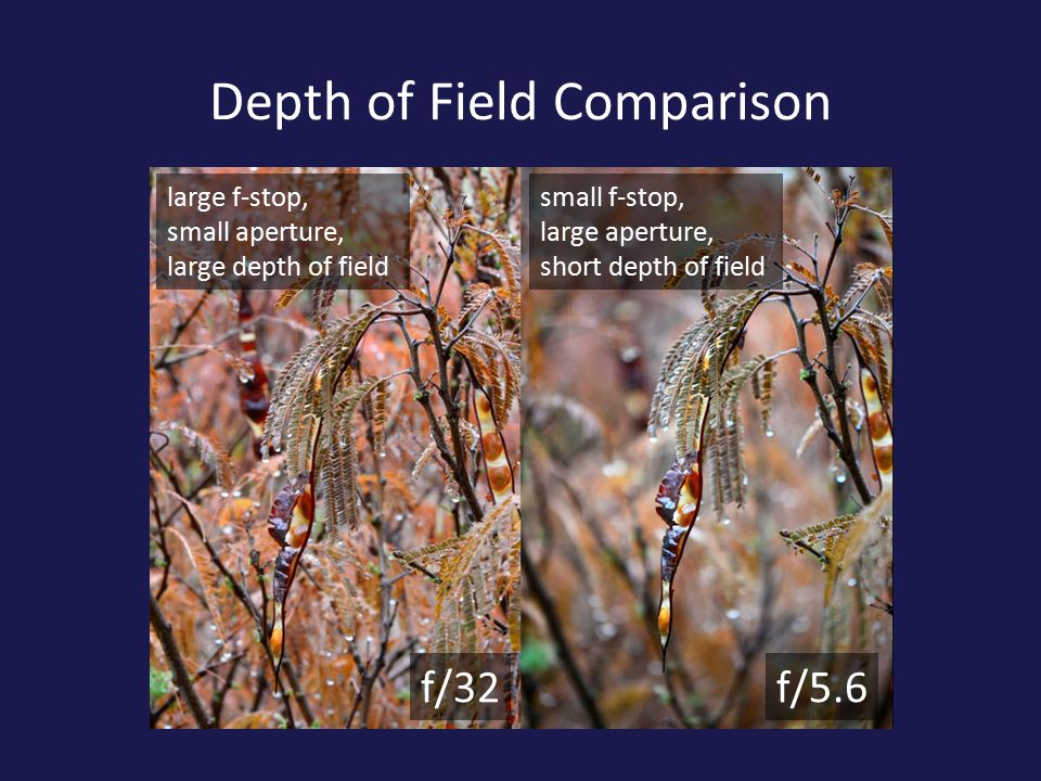 Depth of Field Comparison f/32f/5.6 large f-stop, small aperture, large depth of field small f-stop, large aperture, short depth of field