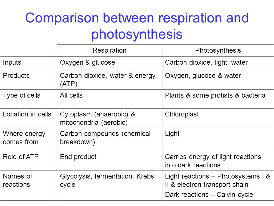 Compare And Contrast The Equations For Cellular Respiration ...