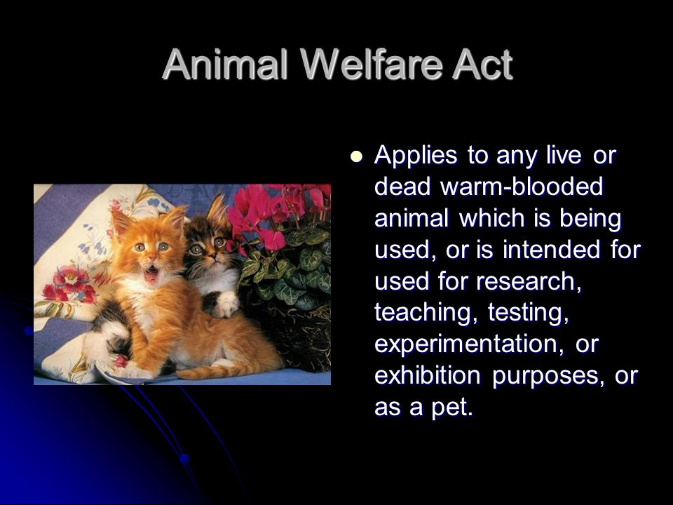 Animal Welfare Act Applies to any live or dead warm-blooded animal which is being used, or is intended for used for research, teaching, testing, experimentation, or exhibition purposes, or as a pet.