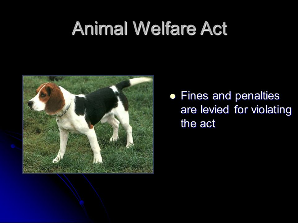 Animal Welfare Act Fines and penalties are levied for violating the act Fines and penalties are levied for violating the act