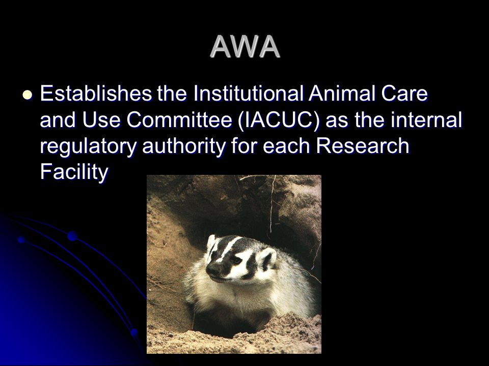 AWA Establishes the Institutional Animal Care and Use Committee (IACUC) as the internal regulatory authority for each Research Facility Establishes the Institutional Animal Care and Use Committee (IACUC) as the internal regulatory authority for each Research Facility