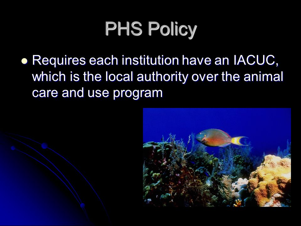 PHS Policy Requires each institution have an IACUC, which is the local authority over the animal care and use program Requires each institution have an IACUC, which is the local authority over the animal care and use program