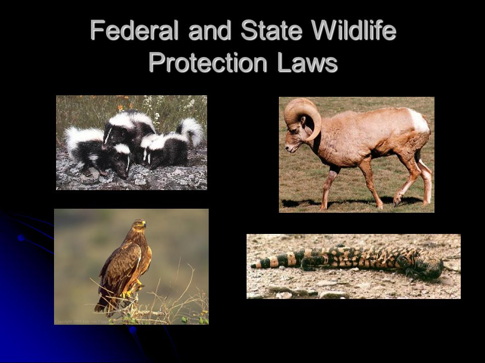 Federal and State Wildlife Protection Laws