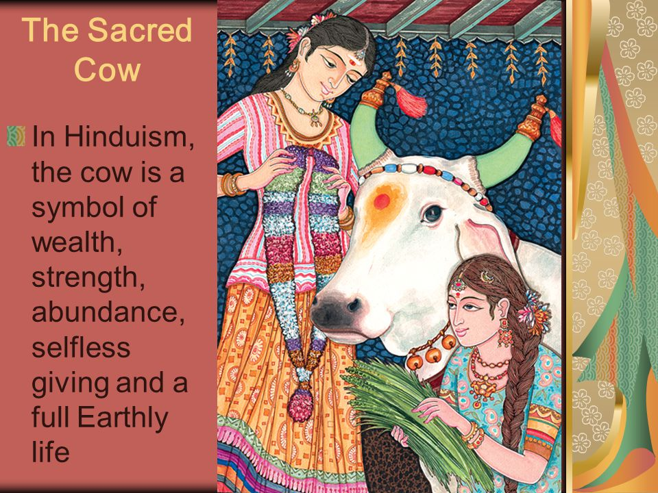 The Sacred Cow In Hinduism, the cow is a symbol of wealth, strength, abundance, selfless giving and a full Earthly life