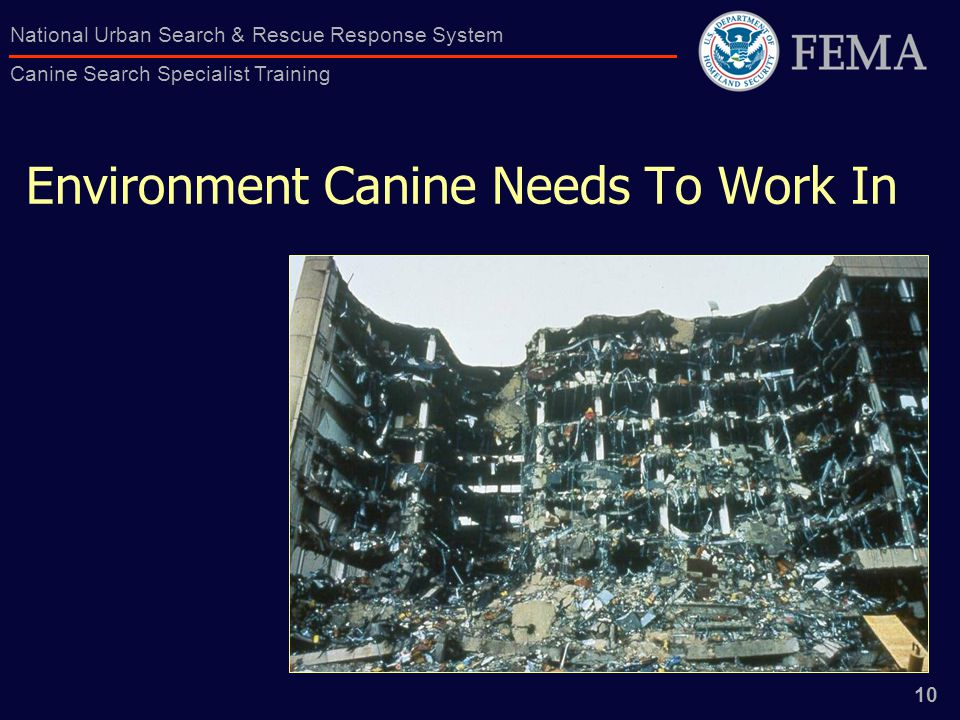 10 National Urban Search & Rescue Response System Canine Search Specialist Training Environment Canine Needs To Work In