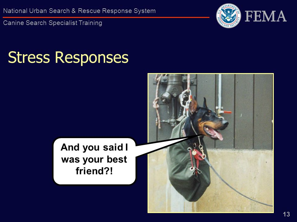 13 National Urban Search & Rescue Response System Canine Search Specialist Training And you said I was your best friend .