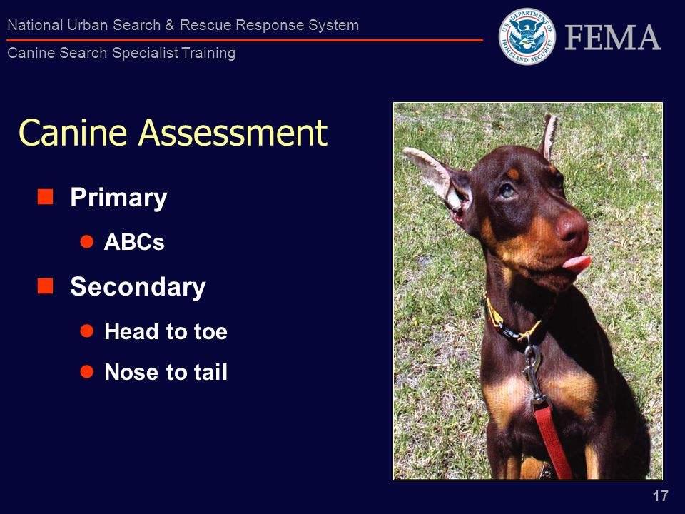 17 National Urban Search & Rescue Response System Canine Search Specialist Training Canine Assessment Primary ABCs Secondary Head to toe Nose to tail