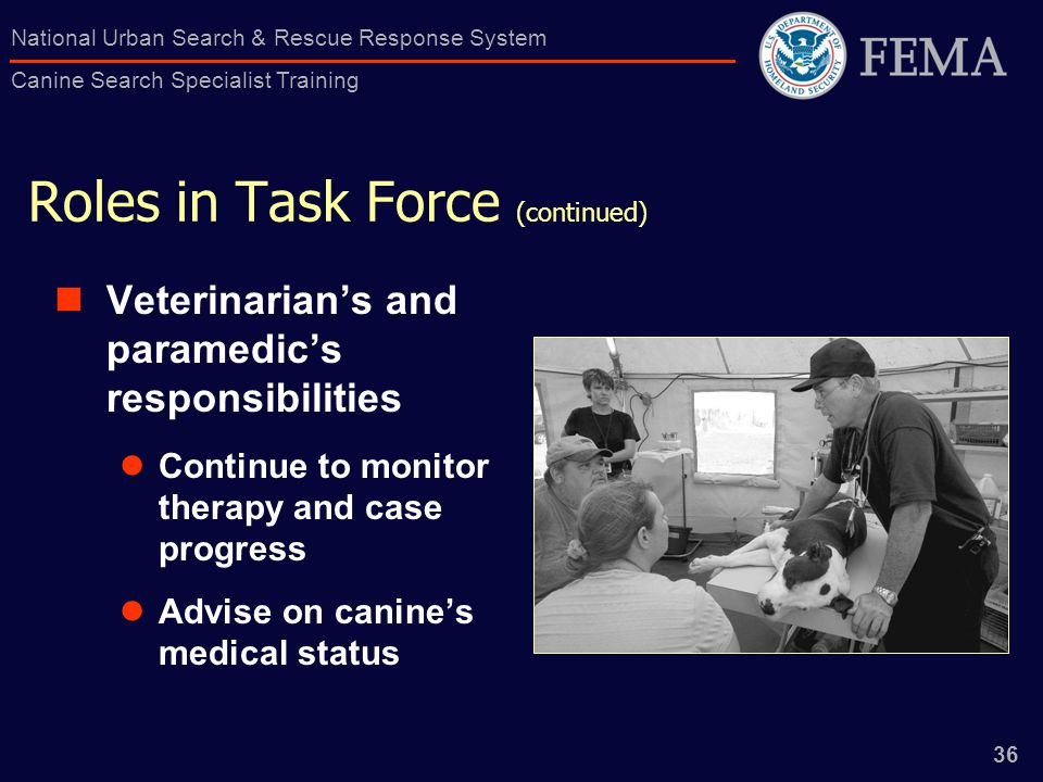 36 National Urban Search & Rescue Response System Canine Search Specialist Training Roles in Task Force (continued) Veterinarian's and paramedic's responsibilities Continue to monitor therapy and case progress Advise on canine's medical status