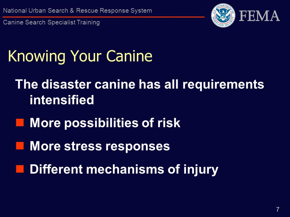 7 National Urban Search & Rescue Response System Canine Search Specialist Training Knowing Your Canine The disaster canine has all requirements intensified More possibilities of risk More stress responses Different mechanisms of injury