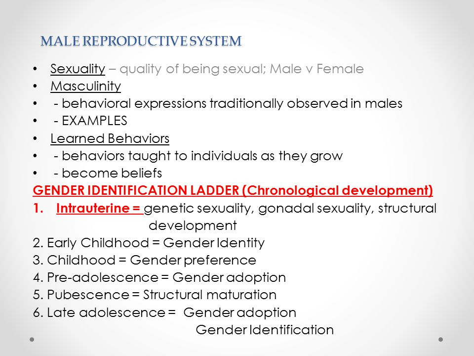 MALE REPRODUCTIVE SYSTEM Sexuality – quality of being sexual; Male v Female Masculinity - behavioral expressions traditionally observed in males - EXAMPLES Learned Behaviors - behaviors taught to individuals as they grow - become beliefs GENDER IDENTIFICATION LADDER (Chronological development) 1.