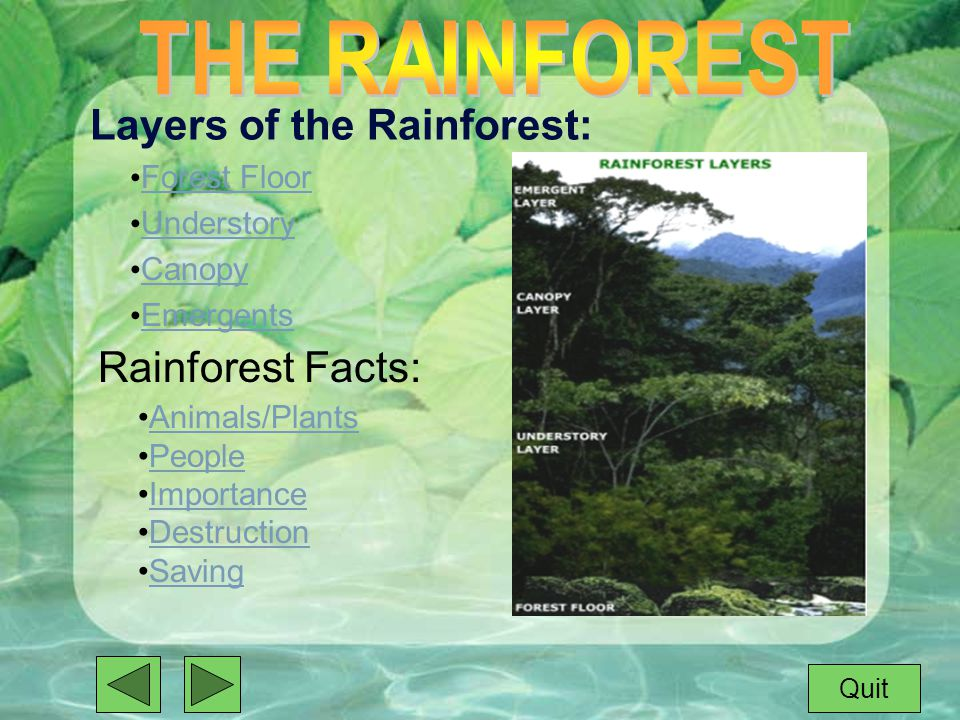 6 Layers of the Rainforest Forest Floor Understory Canopy Emergents Rainforest Facts Animals/Plants People Importance Destruction Saving Quit & An Interactive Powerpoint by:. Rainforests have evolved over ...