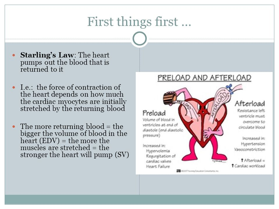 First things first … Starling's Law: The heart pumps out the blood that is returned to it I.e.: the force of contraction of the heart depends on how much the cardiac myocytes are initially stretched by the returning blood The more returning blood = the bigger the volume of blood in the heart (EDV) = the more the muscles are stretched = the stronger the heart will pump (SV)