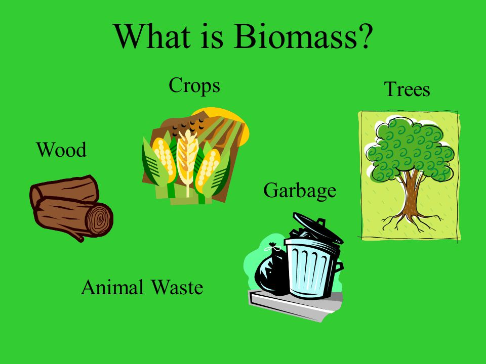 What is Biomass Trees Crops Garbage Animal Waste Wood