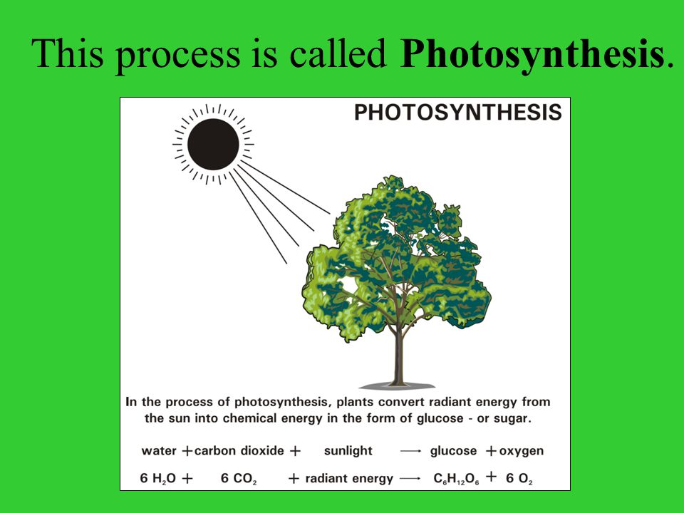 This process is called Photosynthesis.