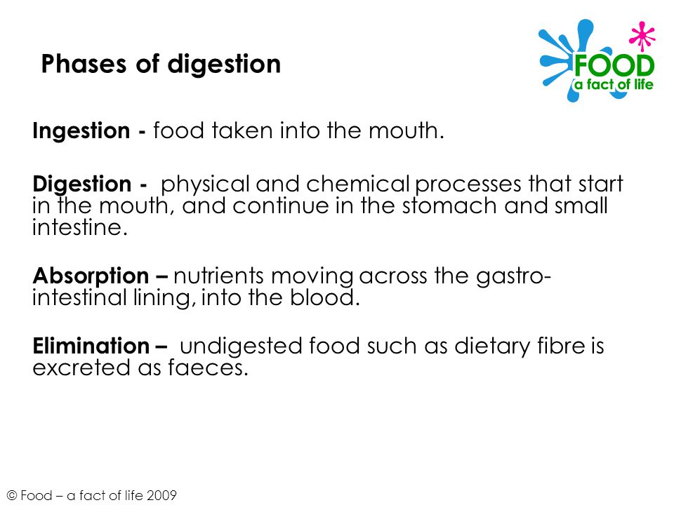 © Food – a fact of life 2009 Phases of digestion Ingestion - food taken into the mouth.