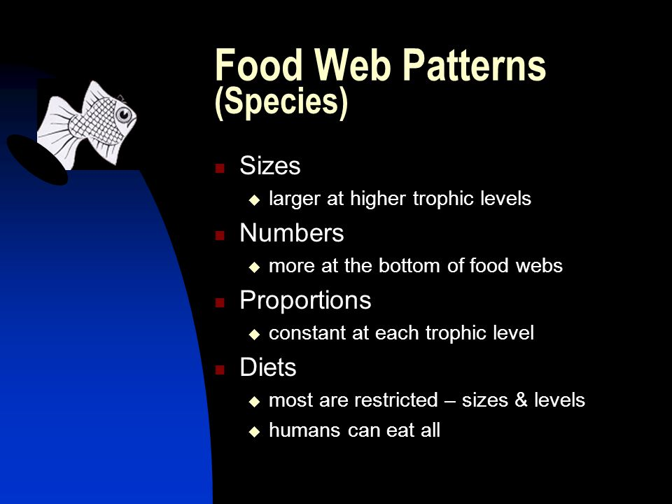 Food Web Patterns (Species) Sizes  larger at higher trophic levels Numbers  more at the bottom of food webs Proportions  constant at each trophic level Diets  most are restricted – sizes & levels  humans can eat all