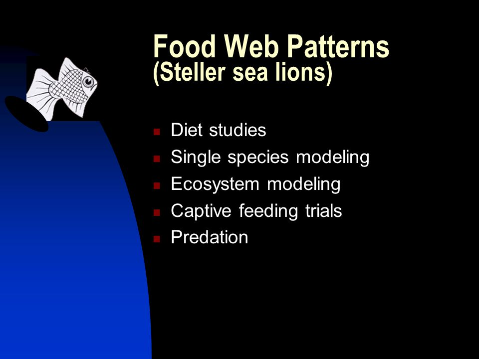 Food Web Patterns (Steller sea lions) Diet studies Single species modeling Ecosystem modeling Captive feeding trials Predation