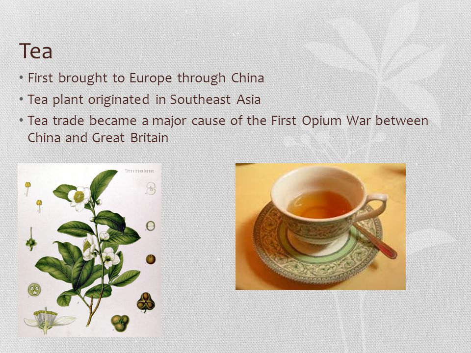 Tea First brought to Europe through China Tea plant originated in Southeast Asia Tea trade became a major cause of the First Opium War between China and Great Britain