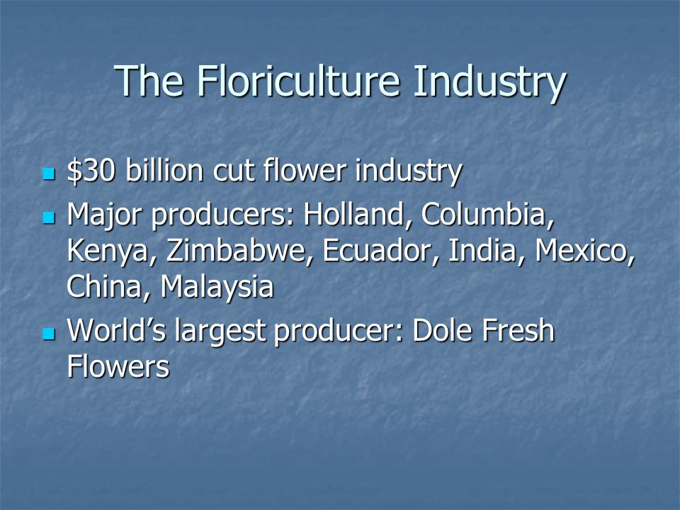 The Floriculture Industry $30 billion cut flower industry $30 billion cut flower industry Major producers: Holland, Columbia, Kenya, Zimbabwe, Ecuador, India, Mexico, China, Malaysia Major producers: Holland, Columbia, Kenya, Zimbabwe, Ecuador, India, Mexico, China, Malaysia World's largest producer: Dole Fresh Flowers World's largest producer: Dole Fresh Flowers