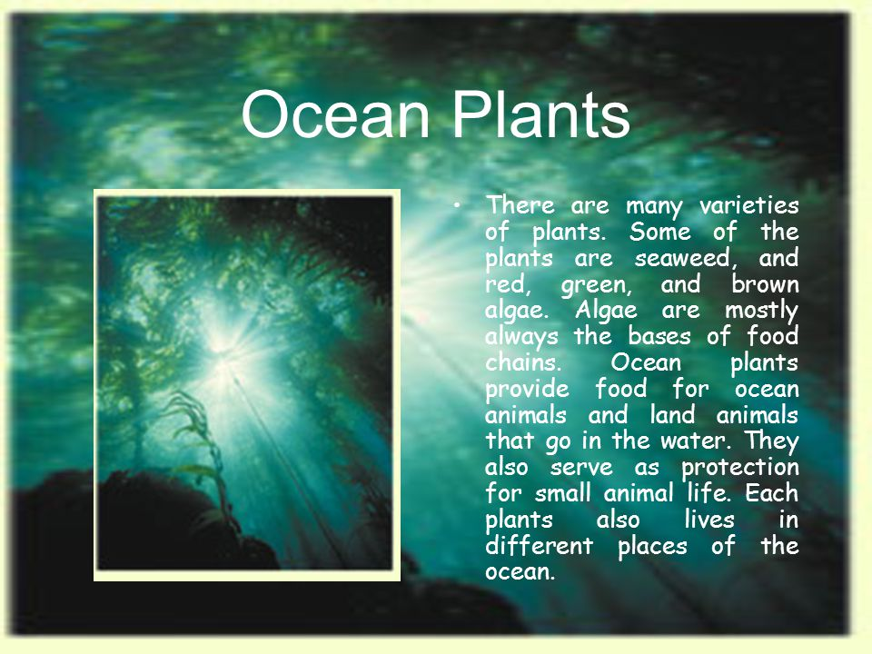 Ocean Climate The average temperature of the oceans is 39 degrees F, but it depends on the location of the ocean.