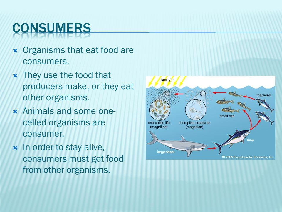  Organisms that eat food are consumers.
