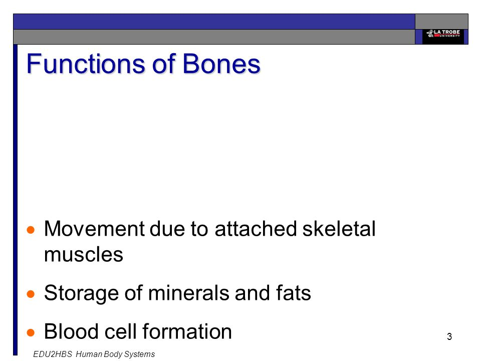 EDU2HBS Human Body Systems 3 Functions of Bones  Movement due to attached skeletal muscles  Storage of minerals and fats  Blood cell formation