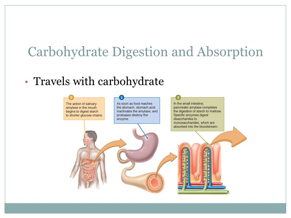 Carbohydrate Digestion and Absorption Travels with carbohydrate