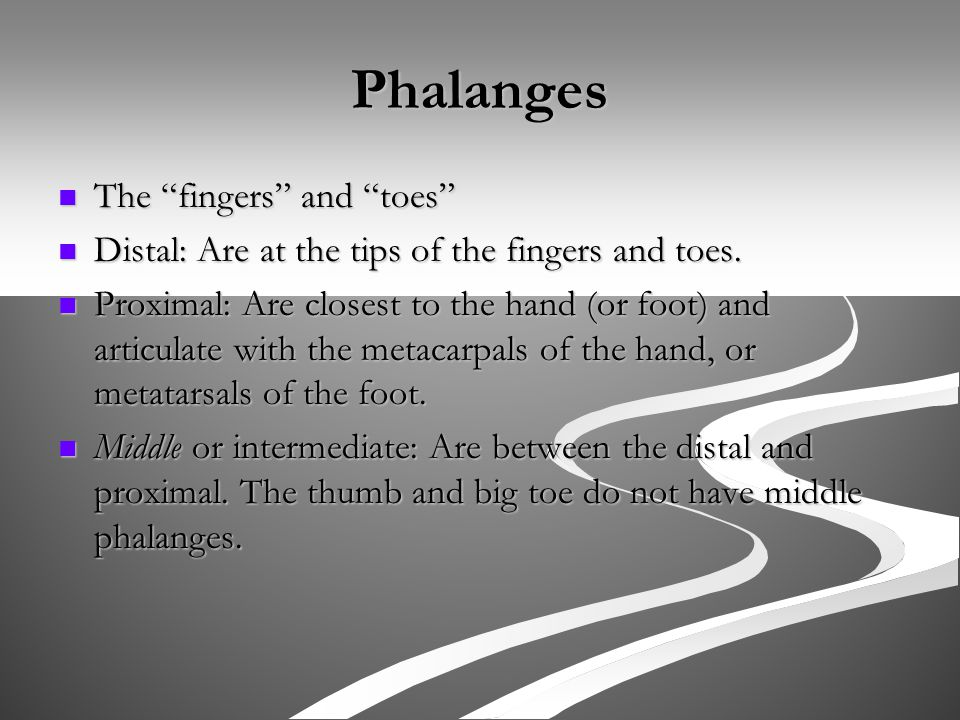 Phalanges The fingers and toes The fingers and toes Distal: Are at the tips of the fingers and toes.