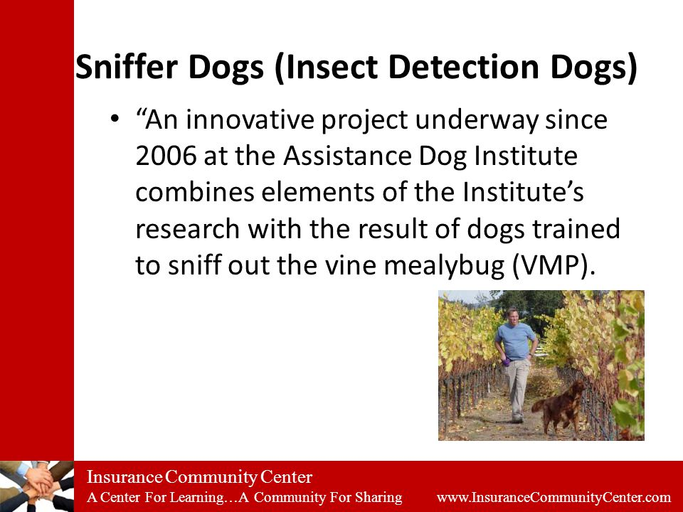 Insurance Community Center A Center For Learning…A Community For Sharing www.InsuranceCommunityCenter.com Sniffer Dogs (Insect Detection Dogs) An innovative project underway since 2006 at the Assistance Dog Institute combines elements of the Institute's research with the result of dogs trained to sniff out the vine mealybug (VMP).