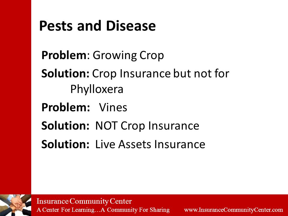 Insurance Community Center A Center For Learning…A Community For Sharing www.InsuranceCommunityCenter.com Pests and Disease Problem: Growing Crop Solution: Crop Insurance but not for Phylloxera Problem:Vines Solution: NOT Crop Insurance Solution: Live Assets Insurance