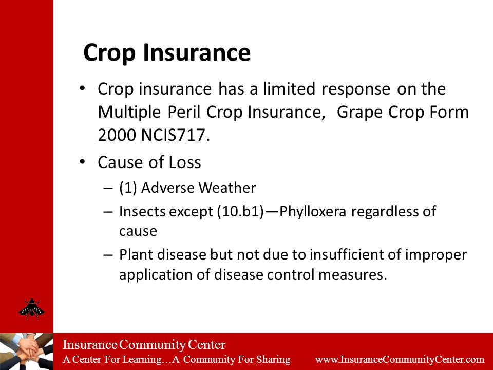 Insurance Community Center A Center For Learning…A Community For Sharing www.InsuranceCommunityCenter.com Crop Insurance Crop insurance has a limited response on the Multiple Peril Crop Insurance, Grape Crop Form 2000 NCIS717.