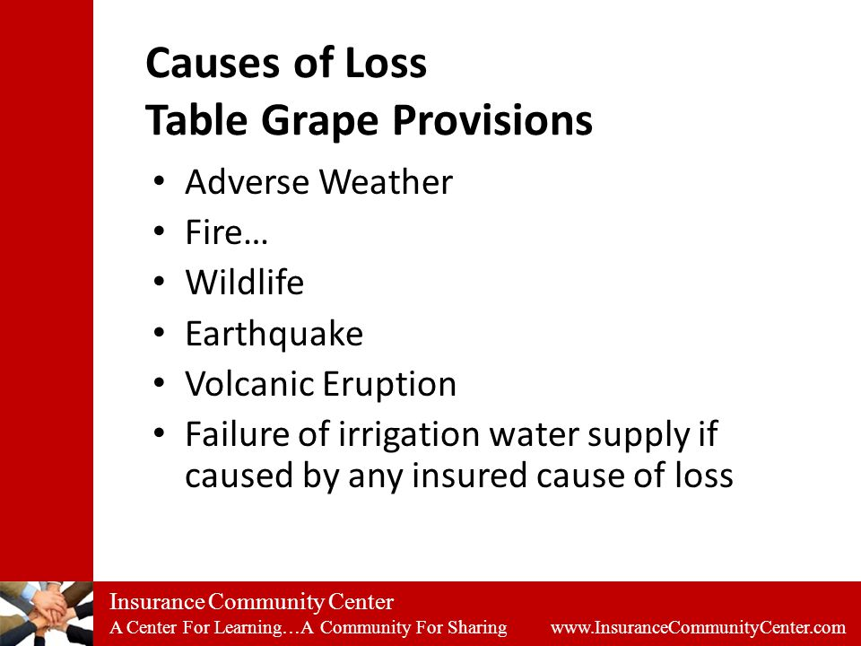 Insurance Community Center A Center For Learning…A Community For Sharing www.InsuranceCommunityCenter.com Causes of Loss Table Grape Provisions Adverse Weather Fire… Wildlife Earthquake Volcanic Eruption Failure of irrigation water supply if caused by any insured cause of loss