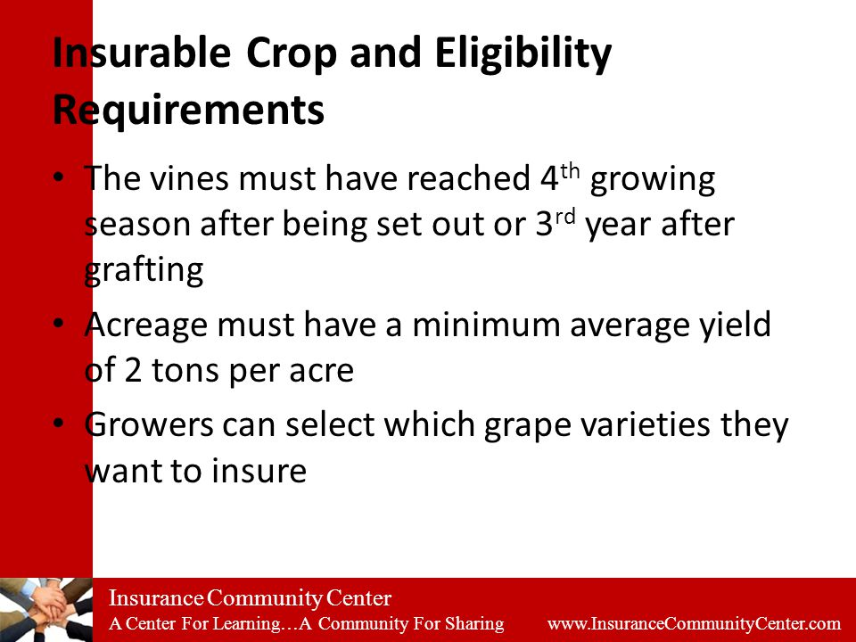 Insurance Community Center A Center For Learning…A Community For Sharing www.InsuranceCommunityCenter.com Insurable Crop and Eligibility Requirements The vines must have reached 4 th growing season after being set out or 3 rd year after grafting Acreage must have a minimum average yield of 2 tons per acre Growers can select which grape varieties they want to insure