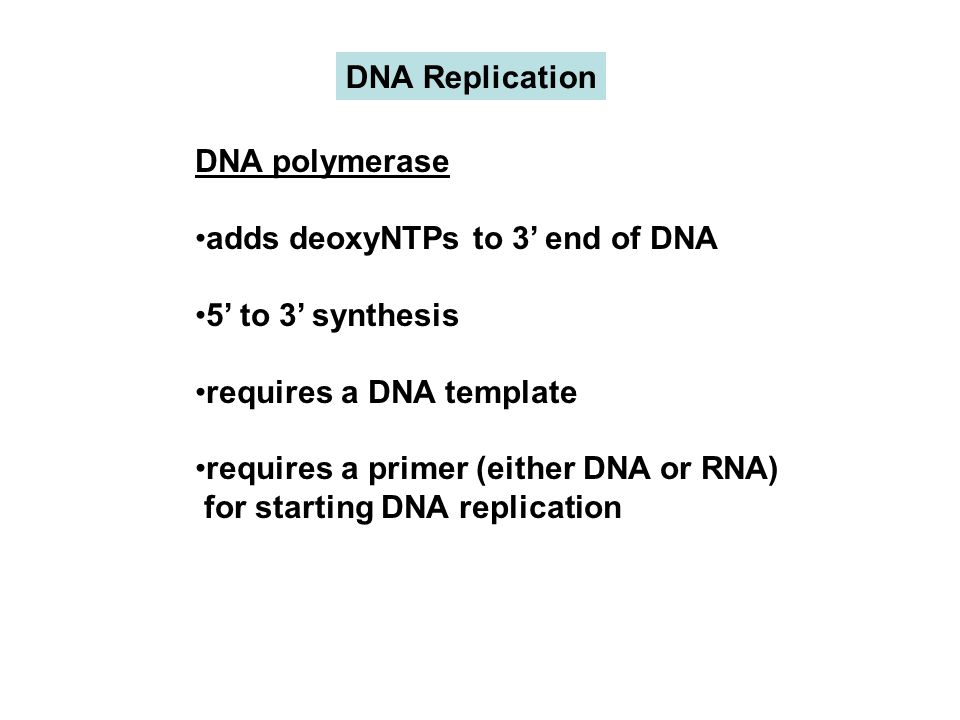 DNA polymerase adds deoxyNTPs to 3' end of DNA 5' to 3' synthesis requires a DNA template requires a primer (either DNA or RNA) for starting DNA replication DNA Replication