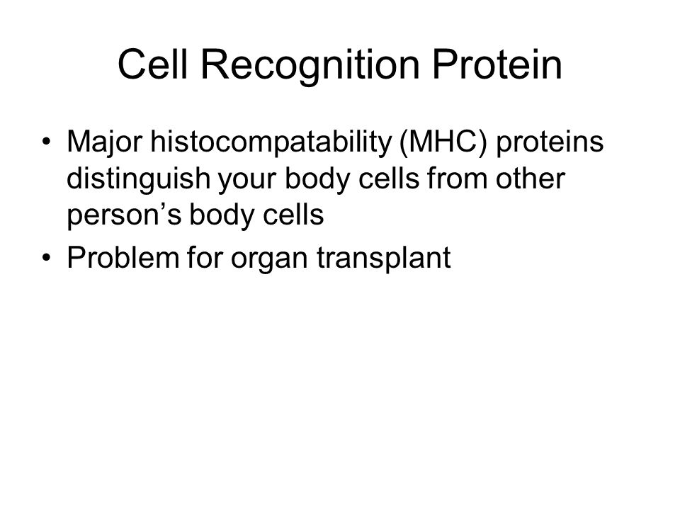 Cell Recognition Protein Major histocompatability (MHC) proteins distinguish your body cells from other person's body cells Problem for organ transplant