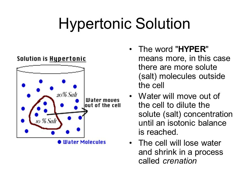 Hypertonic Solution The word HYPER means more, in this case there are more solute (salt) molecules outside the cell Water will move out of the cell to dilute the solute (salt) concentration until an isotonic balance is reached.