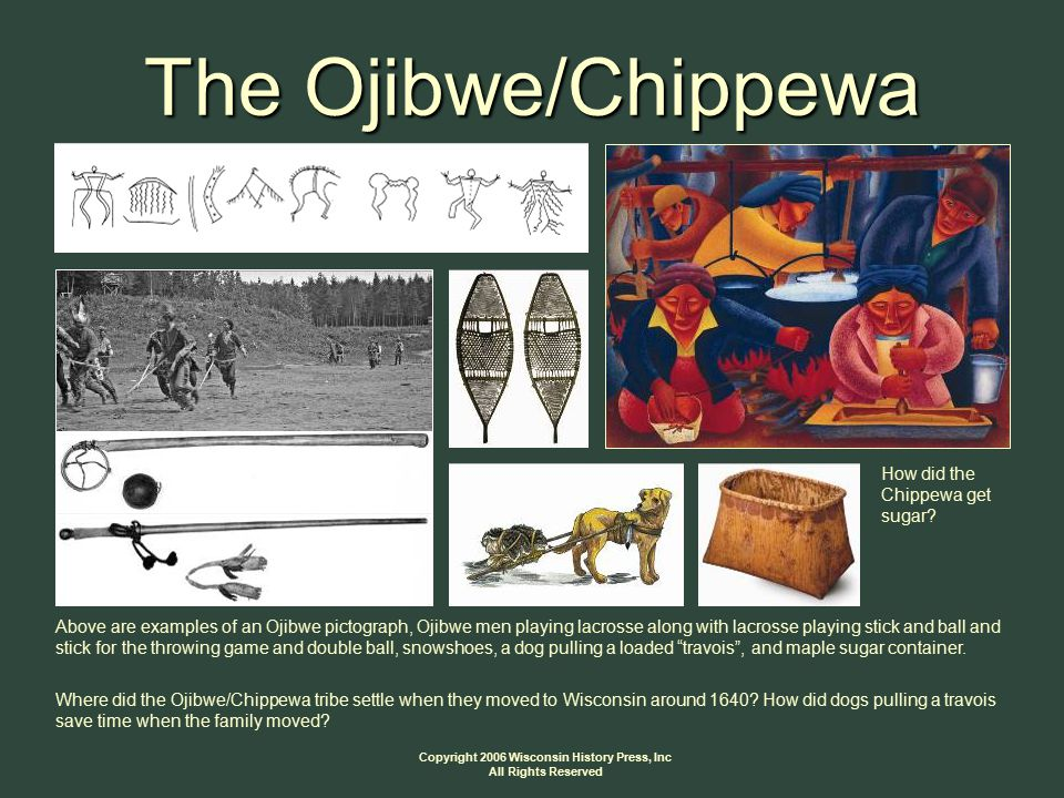 Copyright 2006 Wisconsin History Press, Inc All Rights Reserved The Ojibwe/Chippewa How did the Chippewa get sugar.