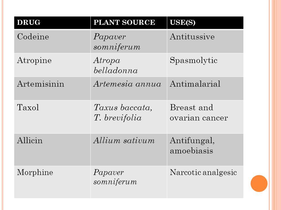 DRUGPLANT SOURCEUSE(S) Codeine Papaver somniferum Antitussive Atropine Atropa belladonna Spasmolytic Artemisinin Artemesia annua Antimalarial Taxol Ta