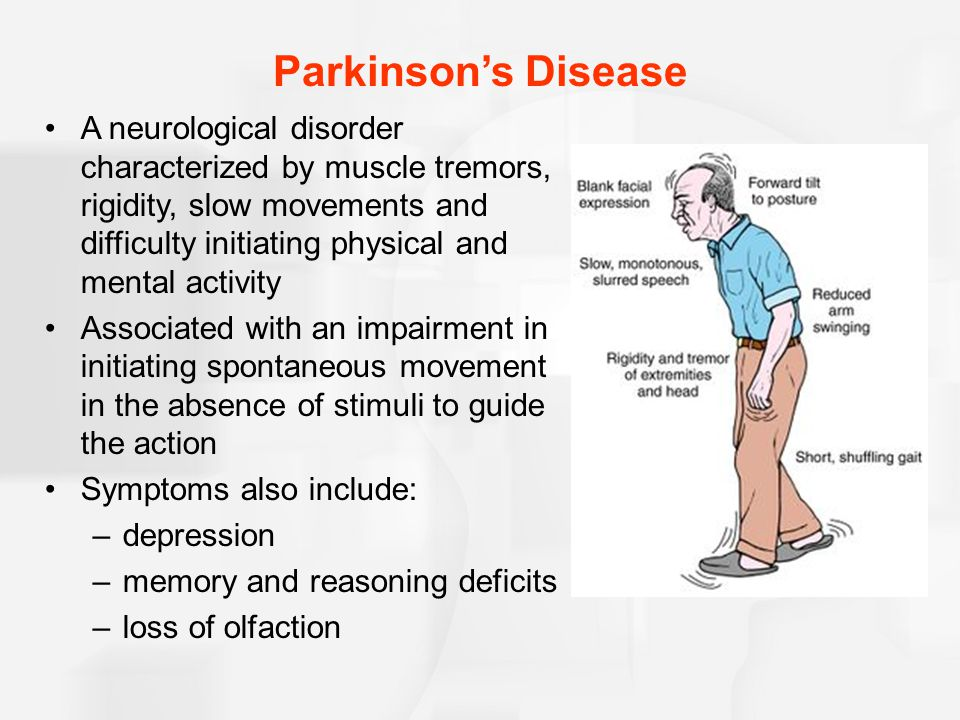Parkinson's Disease A neurological disorder characterized by muscle tremors, rigidity, slow movements and difficulty initiating physical and mental activity Associated with an impairment in initiating spontaneous movement in the absence of stimuli to guide the action Symptoms also include: –depression –memory and reasoning deficits –loss of olfaction