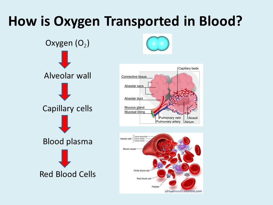 How is Oxygen Transported in Blood.