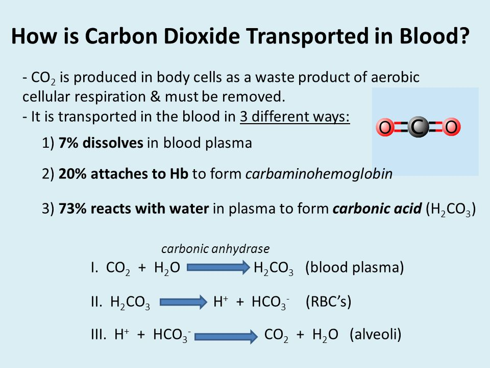 How is Carbon Dioxide Transported in Blood.