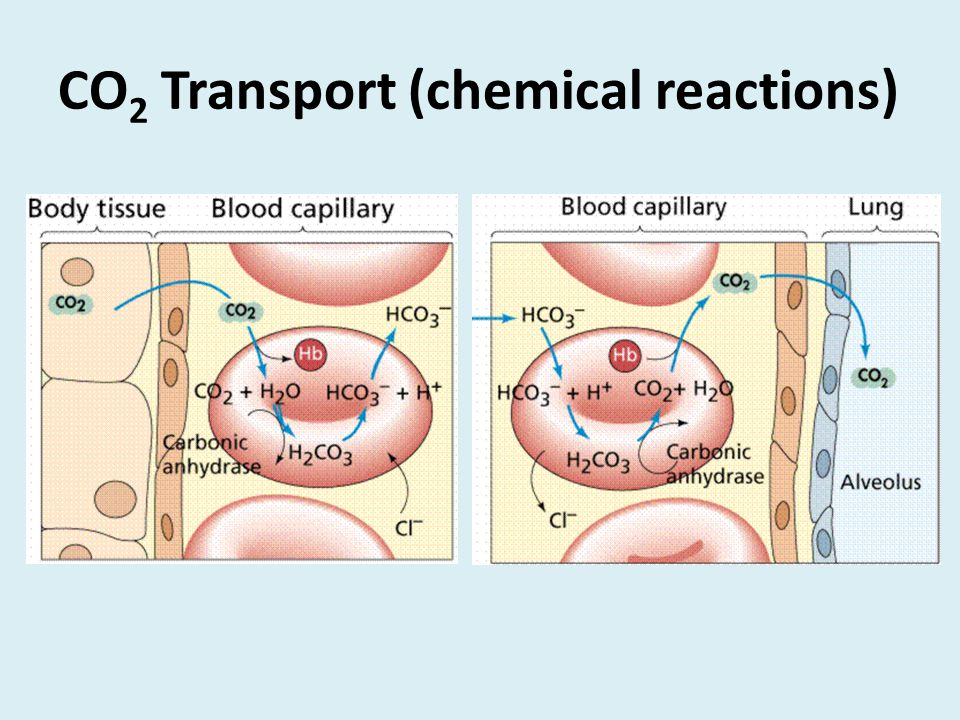 CO 2 Transport (chemical reactions)