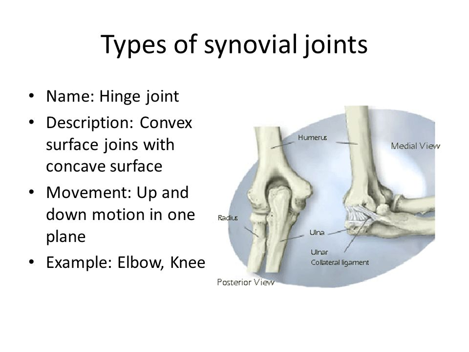 Types of synovial joints Name: Hinge joint Description: Convex surface joins with concave surface Movement: Up and down motion in one plane Example: Elbow, Knee