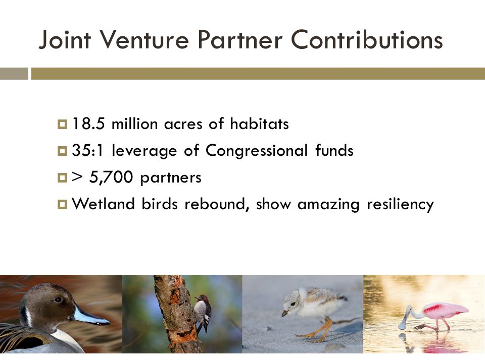 Joint Venture Partner Contributions  18.5 million acres of habitats  35:1 leverage of Congressional funds  > 5,700 partners  Wetland birds rebound, show amazing resiliency