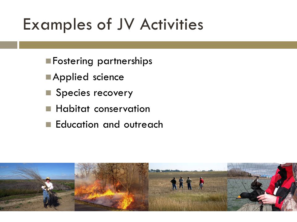 Examples of JV Activities Fostering partnerships Applied science Species recovery Habitat conservation Education and outreach