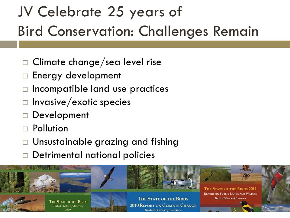 JV Celebrate 25 years of Bird Conservation: Challenges Remain  Climate change/sea level rise  Energy development  Incompatible land use practices  Invasive/exotic species  Development  Pollution  Unsustainable grazing and fishing  Detrimental national policies Insert STOB report covers